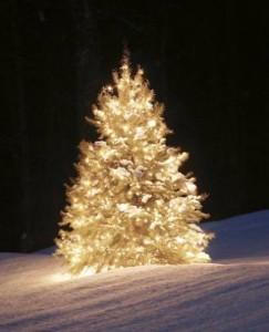 Accendiamo l'albero di Natale